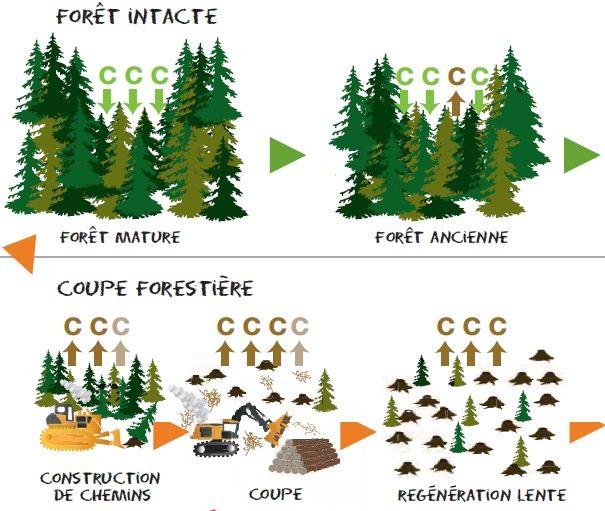 biomasse greenpeace 1