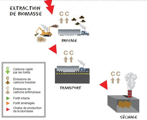 biomasse greenpeace 2