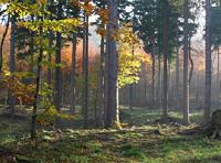 forêts et changement climatique