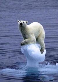 ours sur la bnaquie, rechauffement climatique