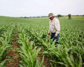 Ethanol de maïs