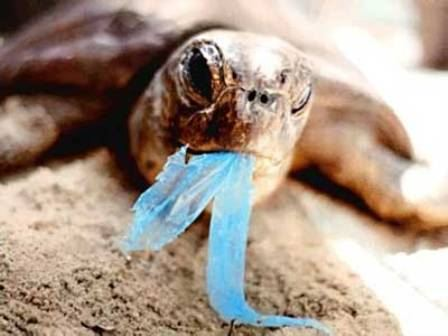 sac plastqiue en mer, danger pour la faune