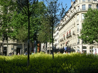 champs elysees verts