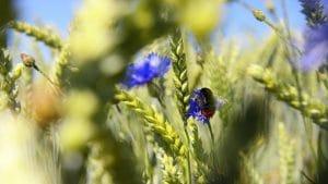 IPBES et biodiversité