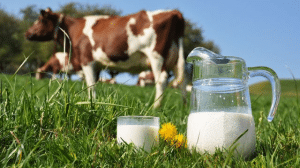 Emissions de GES du secteur de la viande