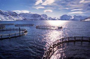 Agroécologie et élevage de poissons