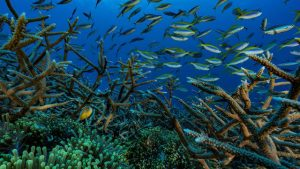 Protection de la haute mer
