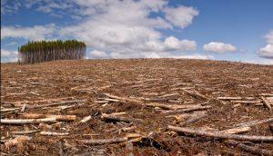 Stratégie nationale de lutte contre la déforestation