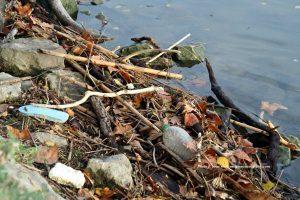 Décennie pour la restauration des écosystèmes