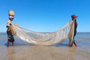Biodiversité : pêche
