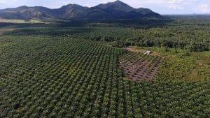 L'huile de palme exlue de l'avantage fiscal