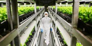 Les usines à légumes au Japon