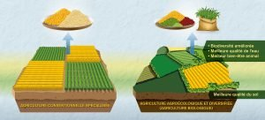 La méthode ACV ne suffit pas pour comparer l'agriculture biologique et conventieonnelle