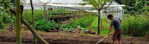 Pour une agriculture sans pesticide chimique