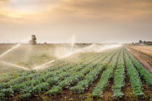 Recyclage de l'eau pour l'agriculture