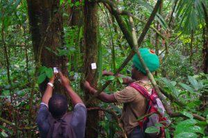 Forêts tropicales, seuil de 32°