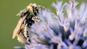 Nouvelle stratégie pour la biodiversité