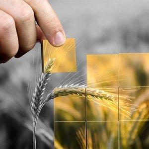 Agribalyse, base de données sur l'alimentation