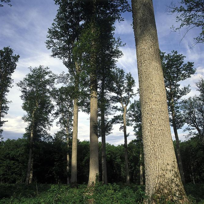 Projet Giono ou la restauration des forêts